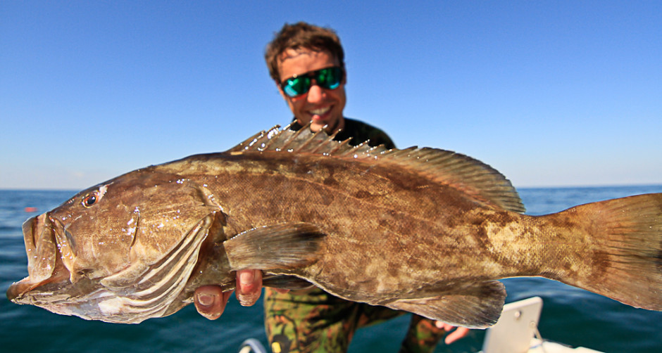 6 Sandwich Grouper