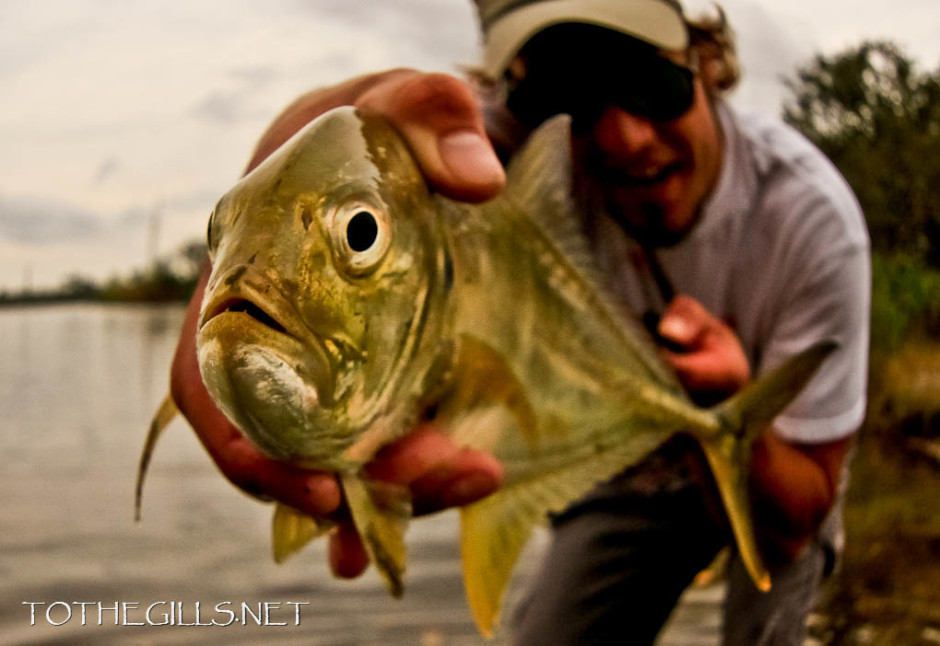 Jacques Crevalle.
